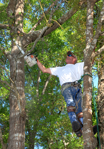 We Re Your All In One Tree Care Experts Providing Of The Essential Services Needs To Thrive Whether It S Fertilizer Lications Or Just A